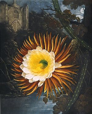 "Abraham Pether - ""The Night Blowing Cereus"" (flower painted by Philip Reinagle, moonlit background by Pether)"