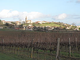 The Gaillac Vineyard with Senouillac beyond