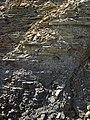 Shale-siltstone-sandstone (Logan Formation, Lower Mississippian; Jackson North roadcut, Ohio, USA) 2 (36806320014).jpg