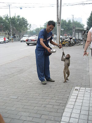 Image of a man with a monkey asking for quais ...