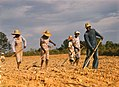 Sharecroppers chopping cotton - 1941.jpg