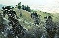 Sierra de las Nieves 1975 07.jpg