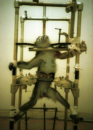 Cruelty to animals - Cruelty to a monkey.
