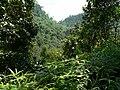Sinharaja Rainforest - panoramio.jpg