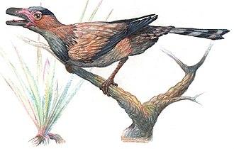 Sinornis - Restoration of Sinornis perching