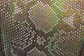 Snake Skin Texture (4).jpg