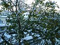 Snowstorm New Jersey October 2011 Number 10.jpg