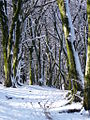 Snowy woodland on Rhymney Valley Ridgeway Walk. - geograph.org.uk - 1728724.jpg