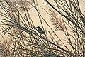 Sparrow-shadow.jpg