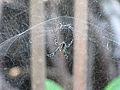 Spider 9322.jpg