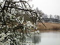 Spring on Szachty, Poznan (2).JPG