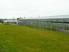 Springfield Nurseries, Llandow - geograph.org.uk - 1770634.jpg