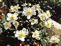 Srinagar - Shalimar Gardens 33.JPG