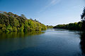 Stackpole Lily Ponds (May 2010).jpg