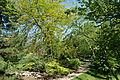 Stanley M. Rowe Arboretum - DSC03396.JPG