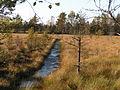 Store Mosse Nationalpark.jpg