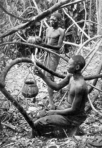 Atrocities in the Congo Free State - Congolese labourers tapping rubber vines near Lusambo in Kasai