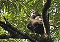 Sulawesi trsr DSCN0344 v1.JPG