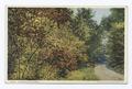 Sumach in Autumn (Pittsfield Mass.) (NYPL b12647398-74022).tiff
