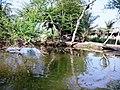 Sundarban (62).jpg