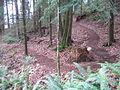 Switchback 7 - Terrace Trail.jpg
