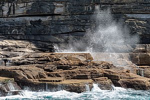 Sydney (AU), Coast, New Zealand sea lions -- 2019 -- 3489.jpg