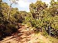 TRILHA PARA TAQUARUÇU - panoramio (4).jpg