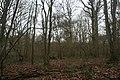 Ten Acre Wood - geograph.org.uk - 1710248.jpg