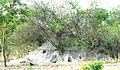 Termite moundZAMBIAtamilword-putRRu.jpg