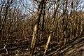 Texel - De Dennen - Nature Path 'Alloo' - View North I.jpg