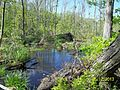 The Lawrence Brook, Monmouth Junction, New Jersey USA May 2013 - panoramio (11).jpg
