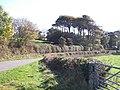 The Plas yn Llangoed Woodland from the Glan-yr-Afon road - geograph.org.uk - 1544564.jpg