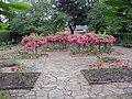 The Rose Garden - geograph.org.uk - 1388227.jpg