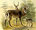 The book of antelopes (1894) (14586201910).jpg