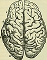 The brain as an organ of mind (1896) (14597262410).jpg