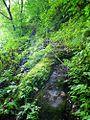The road to Iwaya Kannon 2.jpg