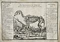 The skeleton of a horse is standing outside a thatched cotta Wellcome V0021786.jpg