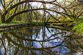 Through Arc Of Trees - panoramio.jpg