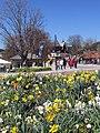 Titisee im Frühling - panoramio (1).jpg