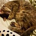 Torbie cat.jpg