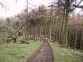 Track, Kirkby Gill Wood - geograph.org.uk - 338900.jpg