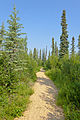 Trail through taiga near Arctic Chalet, Inuvik, NT.jpg