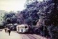 Tram in Belmore Park, 1955.tif