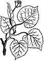 Trattato completo di agricoltura I fig0701.jpg