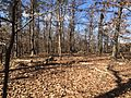 Travilah Serpentine Barrens Wooded Area.JPG