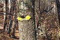 TreeEatingTrailMarker.JPG