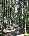 Tree lined footpath at Crombie - geograph.org.uk - 544238.jpg