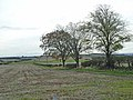 Trees and hedgerow near High Seat - geograph.org.uk - 1027901.jpg
