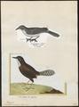 Troglodytes coraya - 1700-1880 - Print - Iconographia Zoologica - Special Collections University of Amsterdam - UBA01 IZ19200445.tif