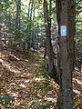 """Tunxis """"White-Dot"""" Blue-Blazed hiking trail near Bradley Brook and CT Route 4 in Nassahegon State Forest (Burlington, Connecticut).jpg"""